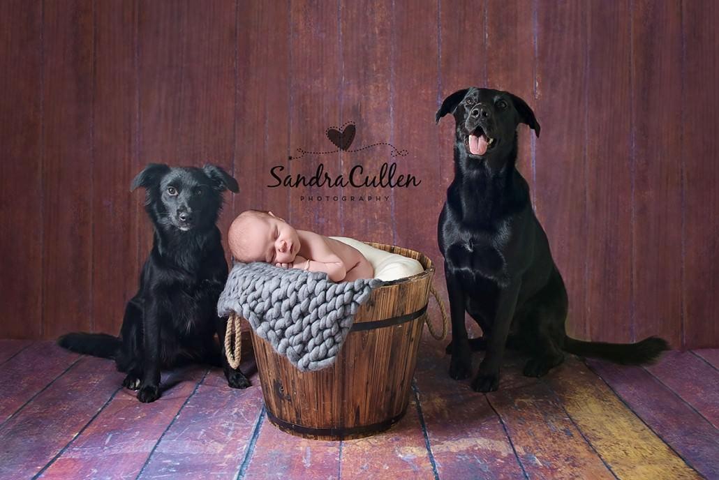 Baby Photographer Welling