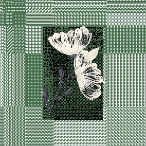 greenwich-photographer-flower-2
